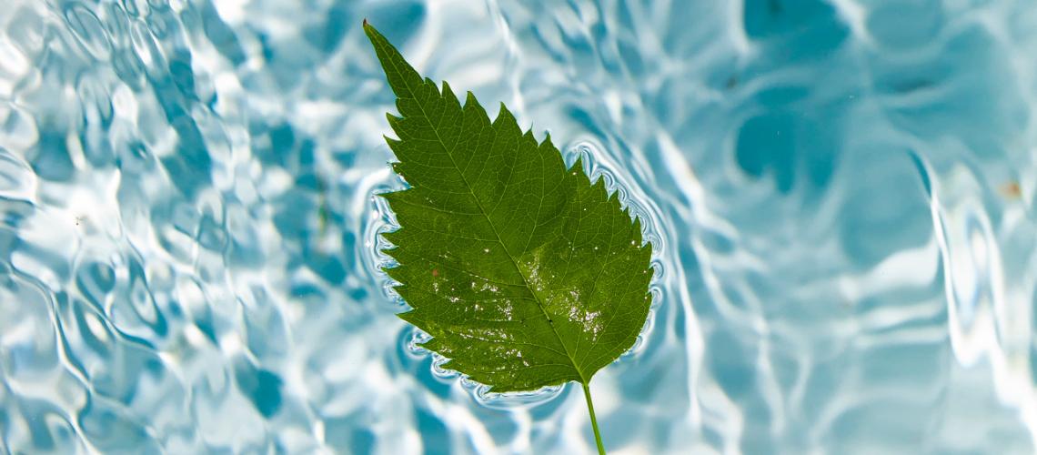 leaf epanaprogrammatismos egkefallou